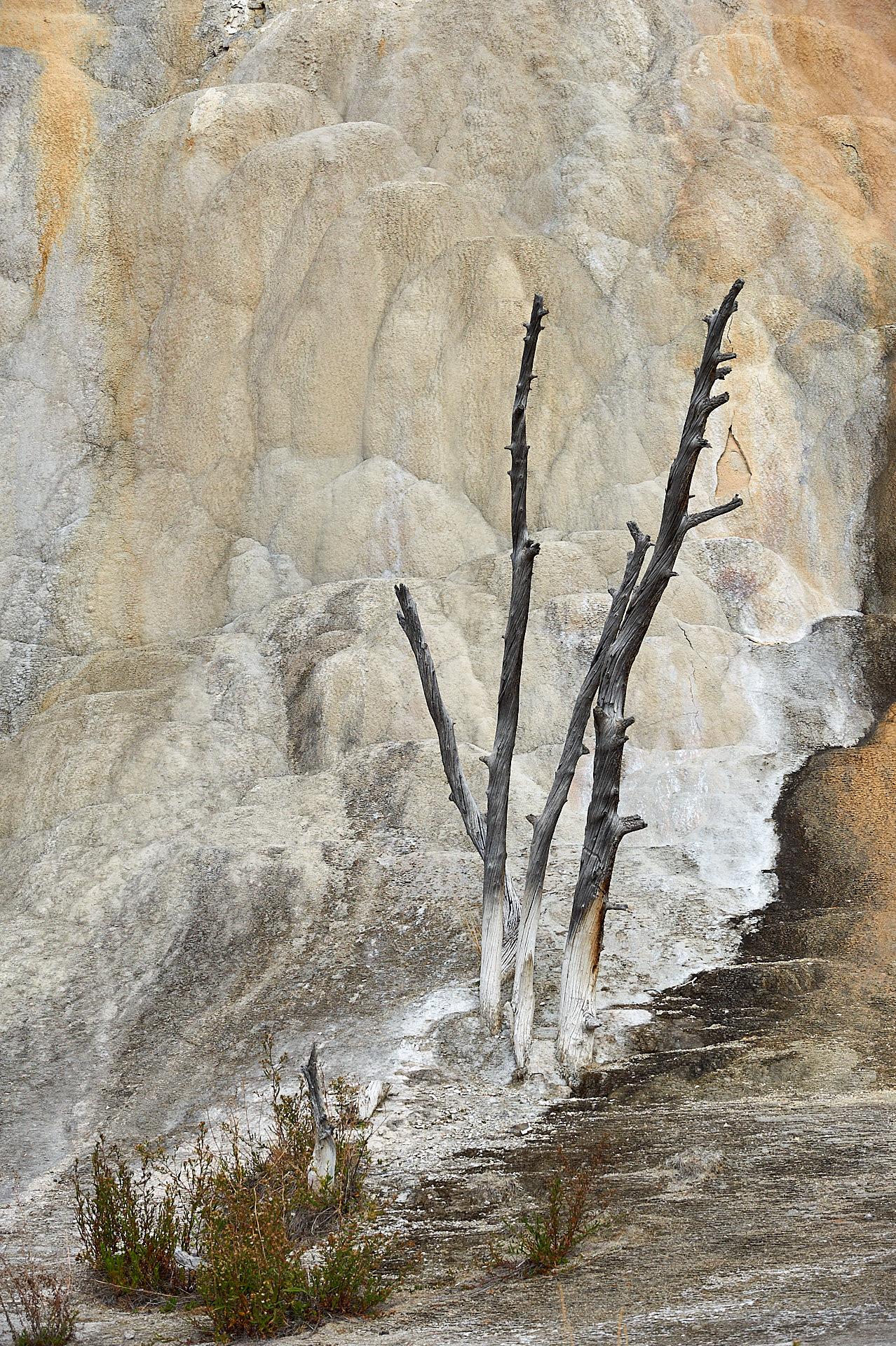 Die Orange Spring Mound Quelle im Yellowstone Nationalaprk hat diesen Baum mit der Zeit versteinert.Kamera: NIKON D3X Brennweite: 120mm 1/320 s bei Blende f/8.0