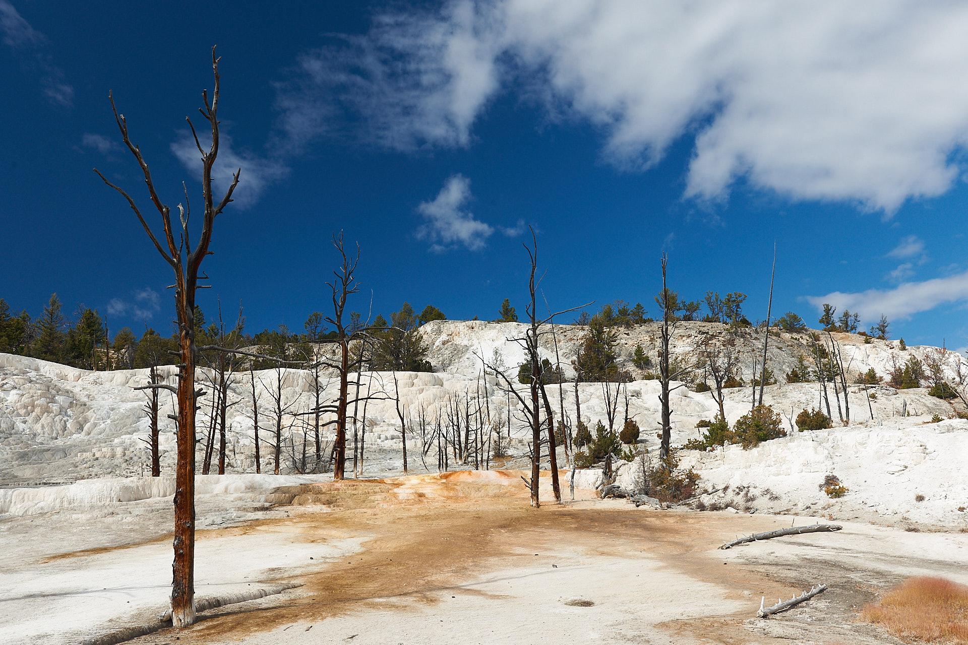 Dieses Naturbild zeigt die Angel Terrase des Mammoth Hot Springs im Yellowstone Nationalpark.Kamera: NIKON D3X Brennweite: 38mm 1/200 s bei Blende f/11.0