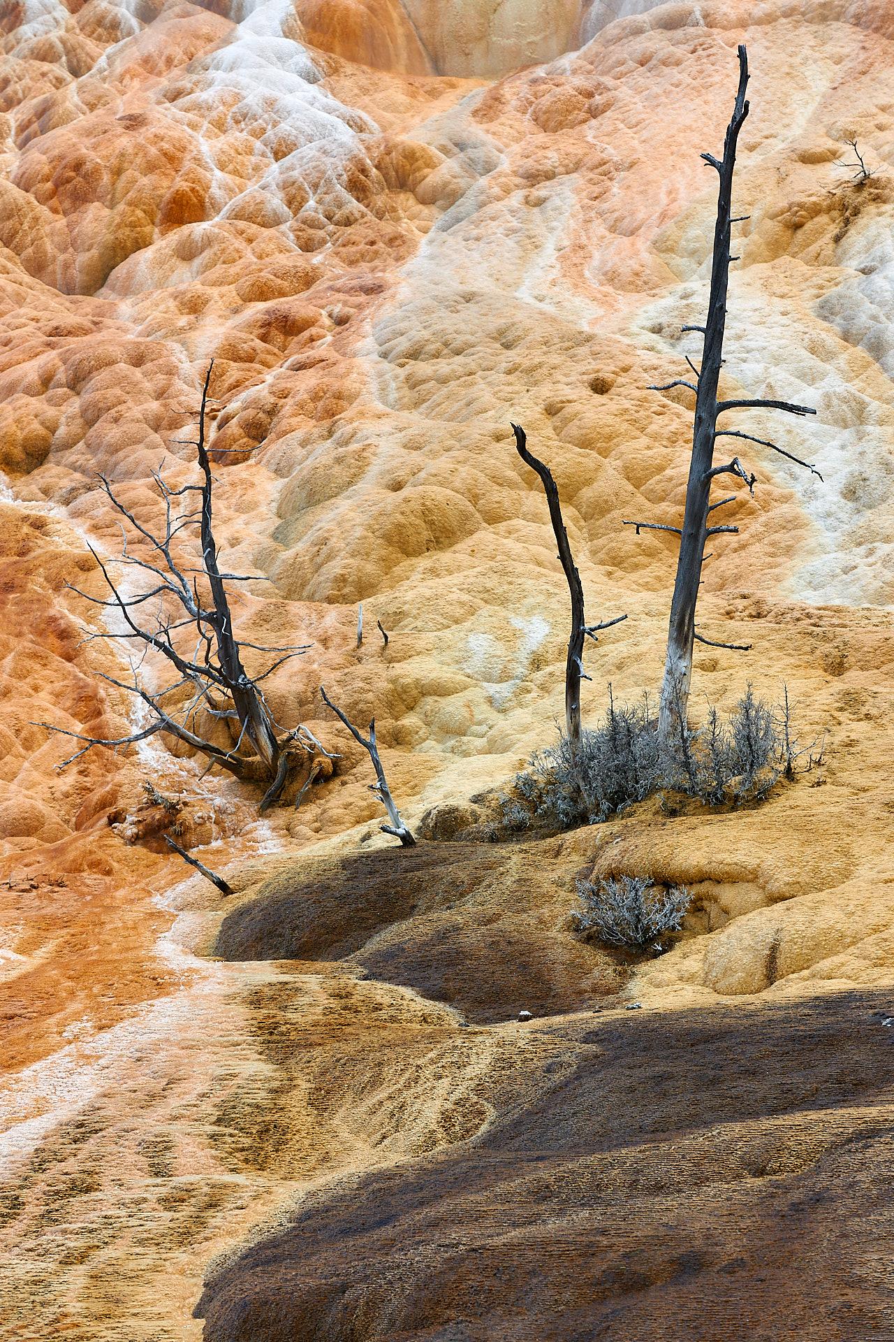 Diese alten Bäume hatten das Pech auf einer heißen Quelle zu wachsen.Kamera: NIKON D3X Brennweite: 105mm 1/160 s bei Blende f/8.0