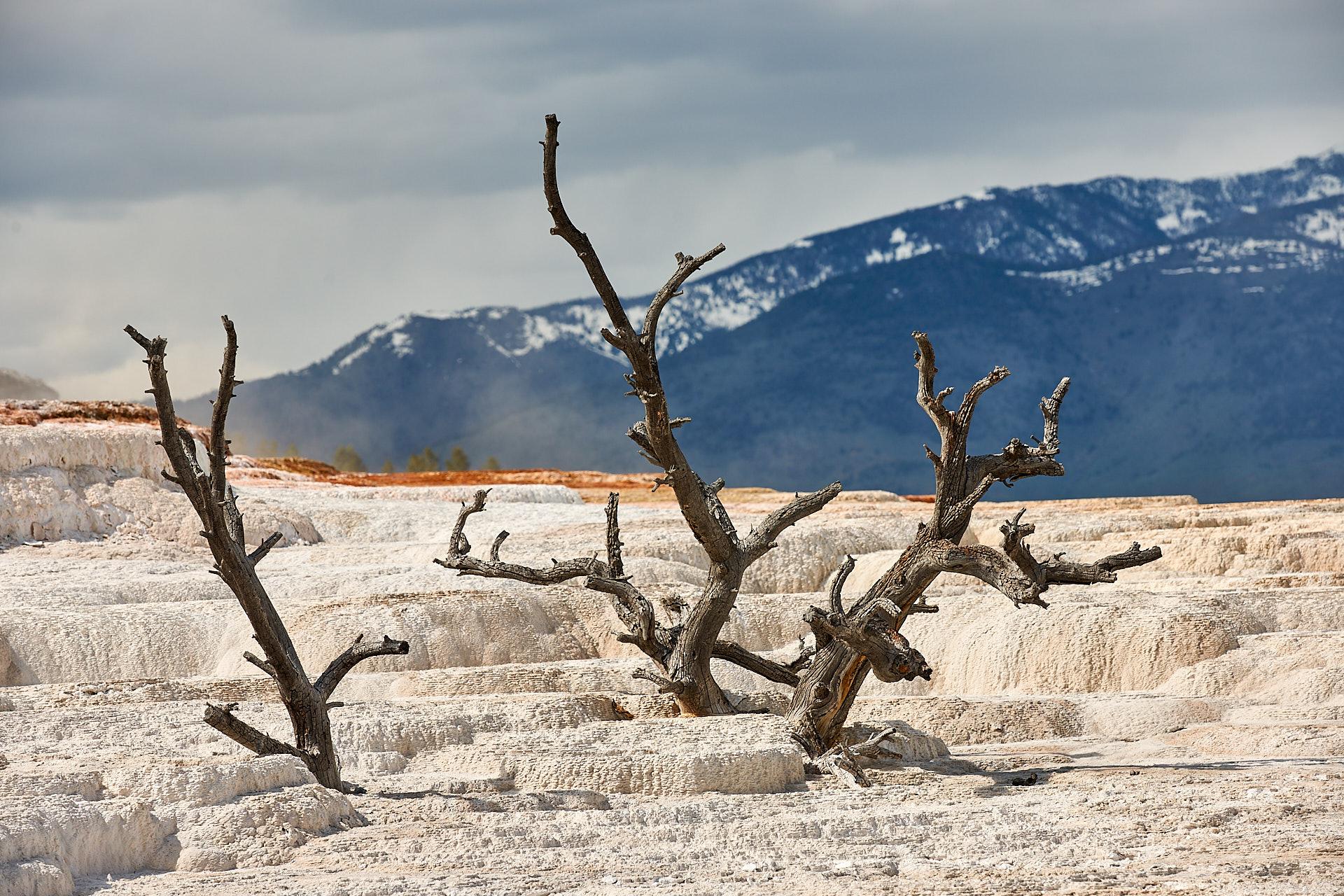 Auch dieser alte Baum hatte sich einen ungünstigen Ort zu Wachsen herausgesucht.Kamera: NIKON D3X Brennweite: 150mm 1/250 s bei Blende f/8.0